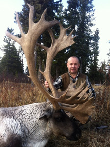 Heavy, old hard-horned, late-season bull with a thick white mane